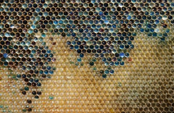 Пчёлы сладкоежки делают неправильный мёд