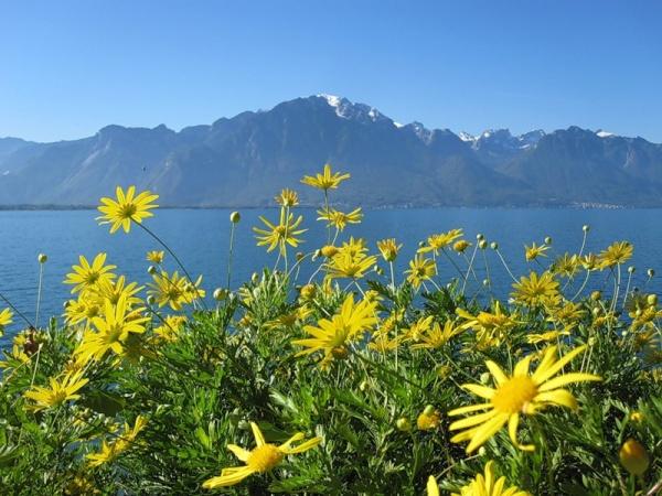 Женевское озеро Леман