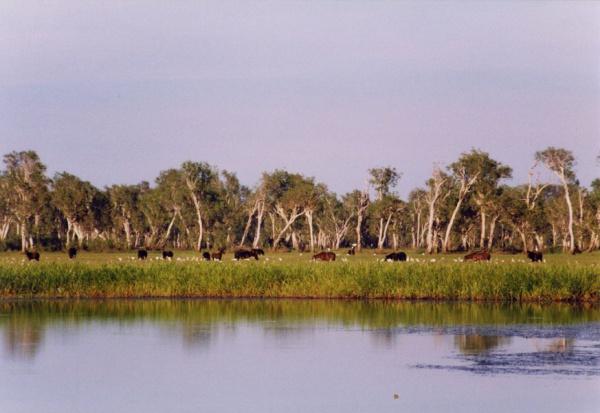 Особо ценные водно-болотные угодия Земли