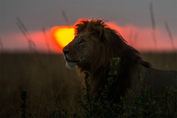 Закаты в Кении Paul Goldstein