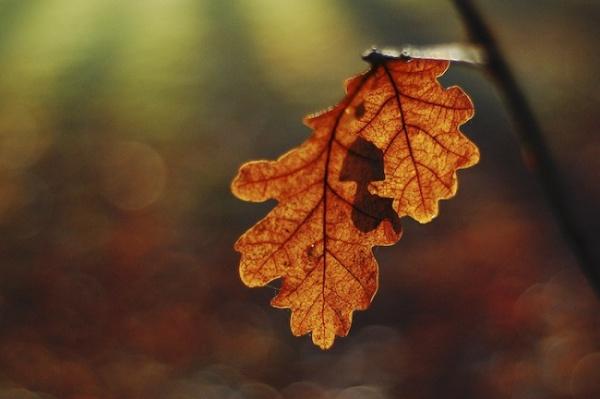 Несколько простых советов о том как фотографировать осенью