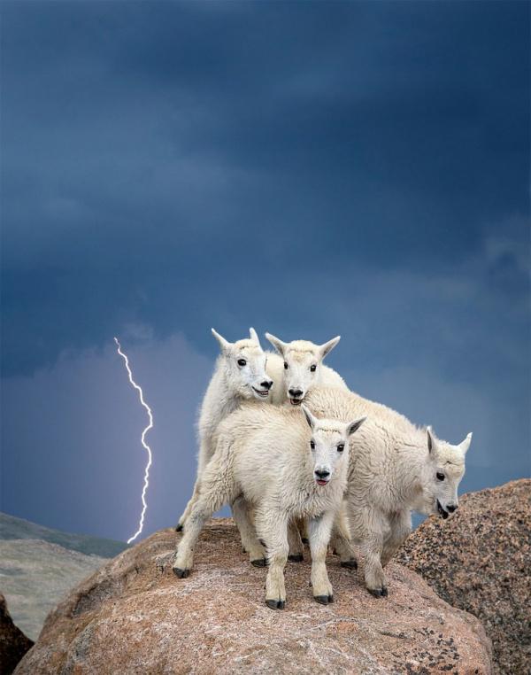 20 живописных фотографий дикой природы