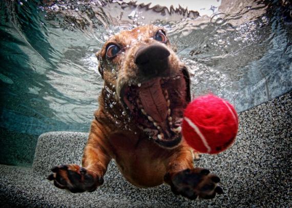 Собаки под водой