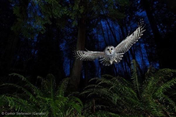 Победители фотоконкурса Wildlife Photographer 2013