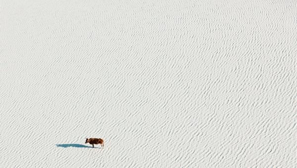 Дикий мир Ботсваны с воздуха