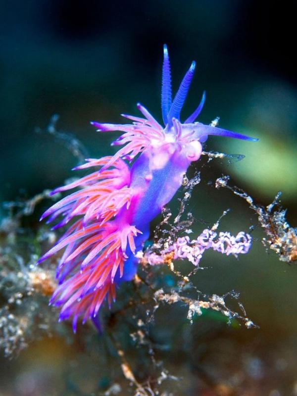 Красота подводного мира от Николаса Самараса