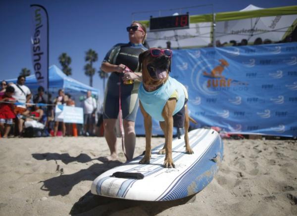 Собачий серфинг «Surf City surf dog 2014»
