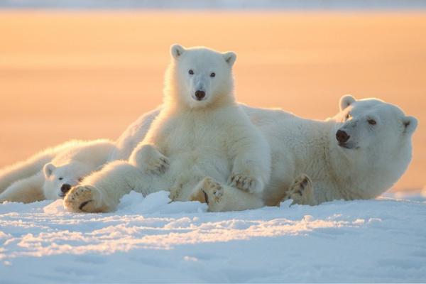 Лучшие арктические фотографии — 2014
