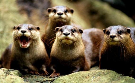 Топ-10 самых древних живых видов животных