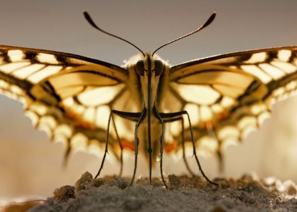Природа глазами Андриана Колотилина