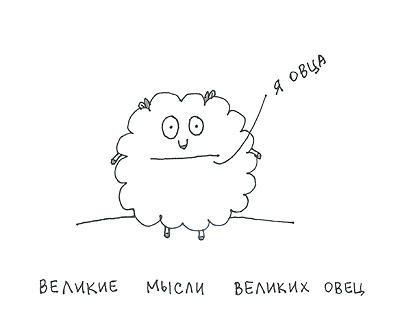 Самая милая овца-мизантроп на свете