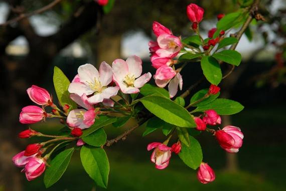 Восхитительные цветущие деревья, которыми невозможно налюбоваться