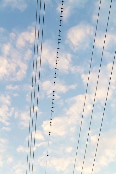 Сейчас вылетит птичка