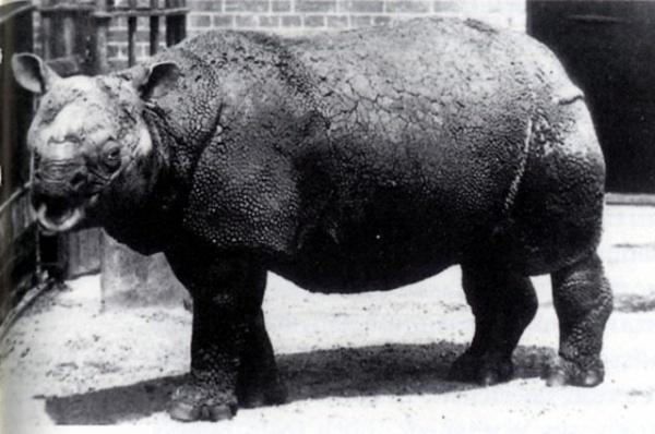 Самый редкий друг. 10 исчезающих видов животных