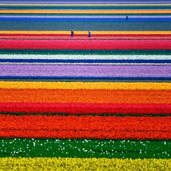 Фотографий, на которых цвет — это главное