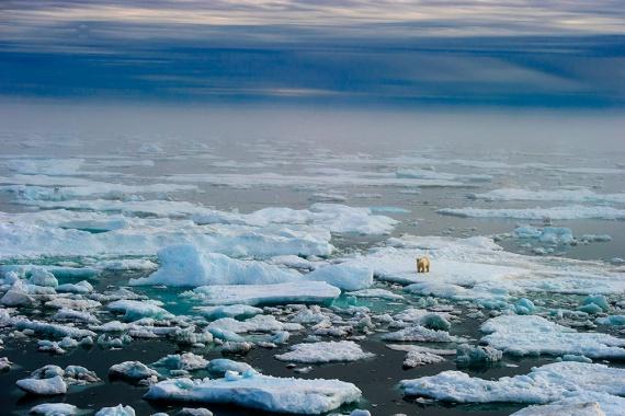 Остров белых медведей