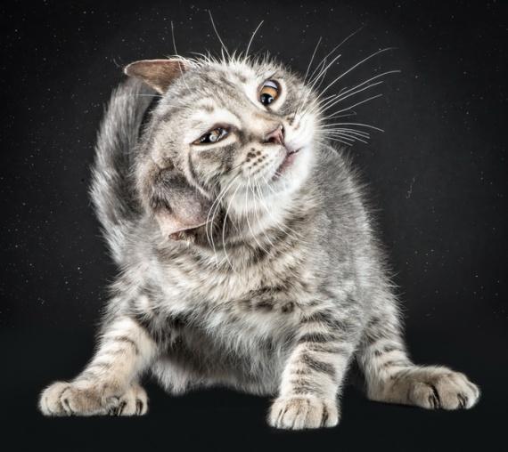 Серия милых фотографий под названием Shake Cats